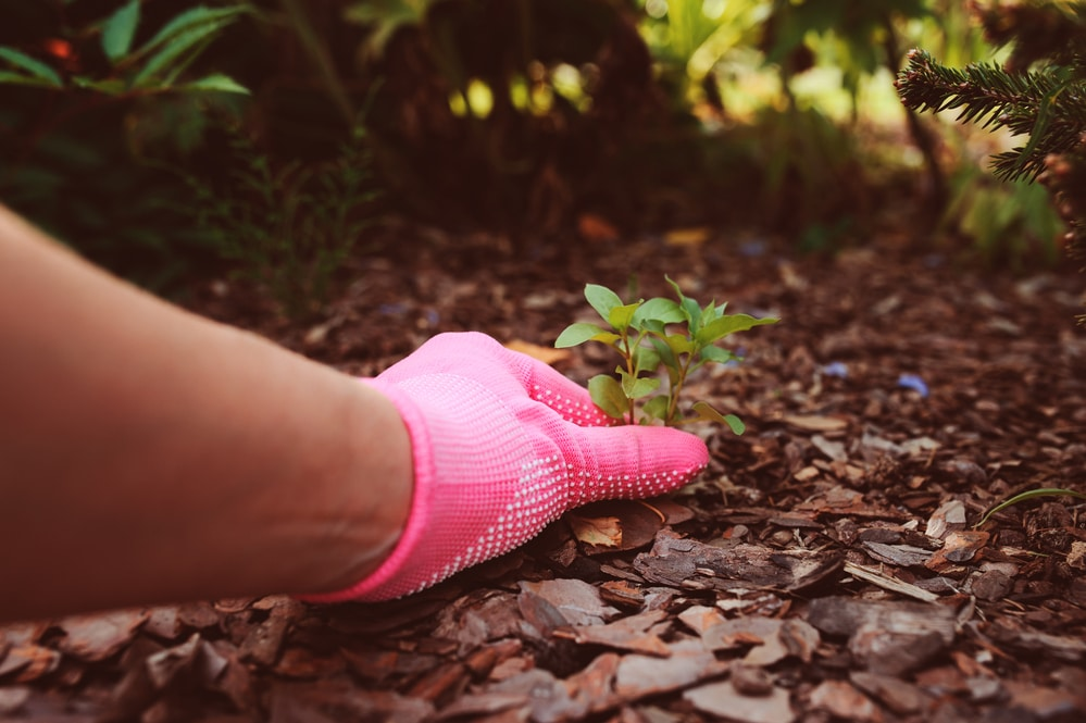 When to Use Weed Killer