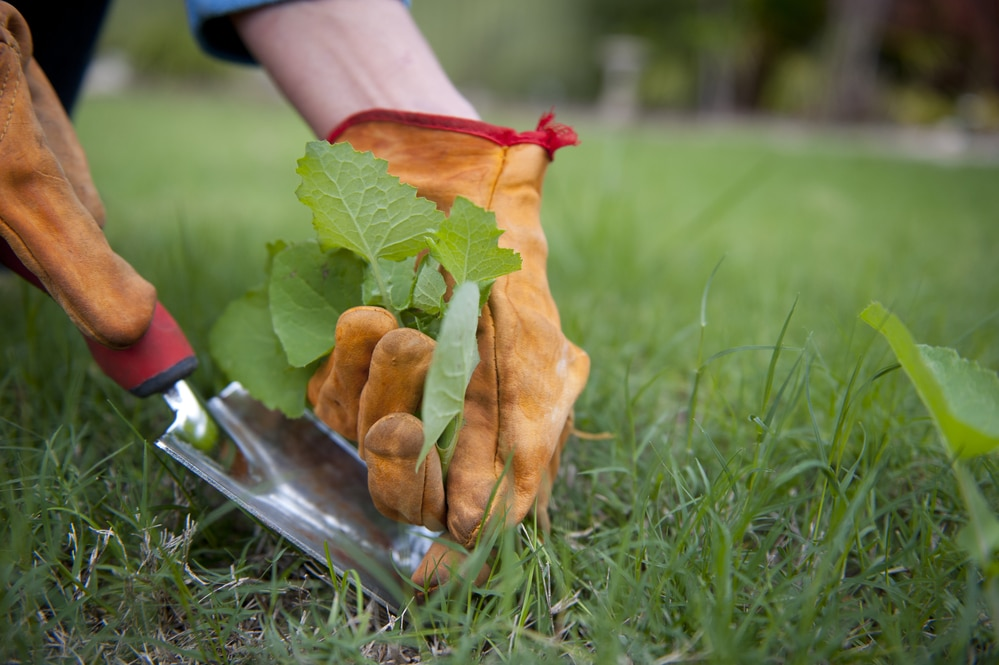 how to kill weeds without weed killer