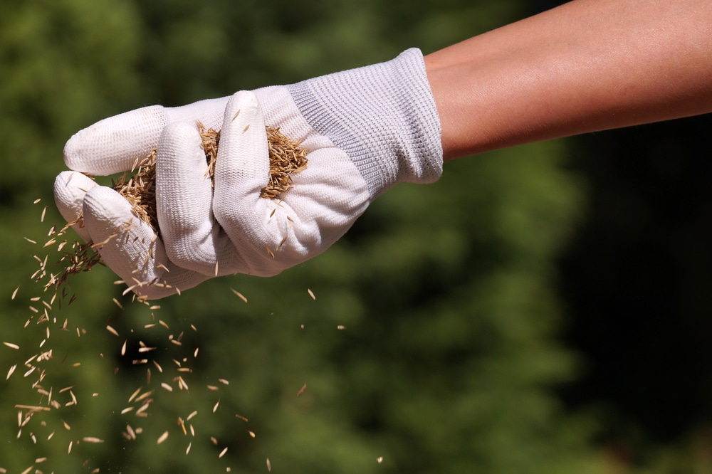 when to sow grass seed